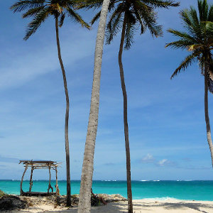 Palm tree location on white Caribbean sandy beach