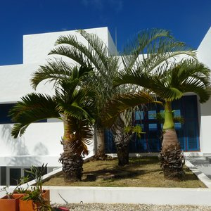 Tropical modern white villa for shoot location in Barbados