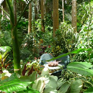 Lush tropical flower garden on Caribbean filming location