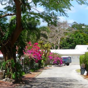 Caribbean village street location with colorful flowers