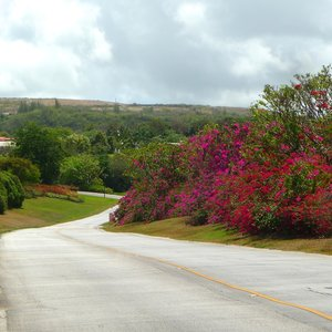 Country road with tropical flower bushes