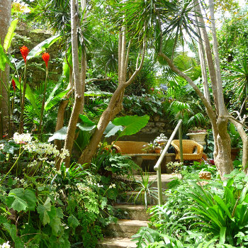Tropical location landscape jungle