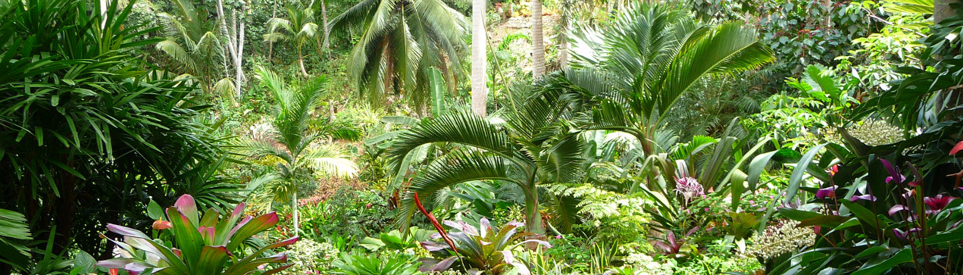 Jungle in Caribbean Tropics